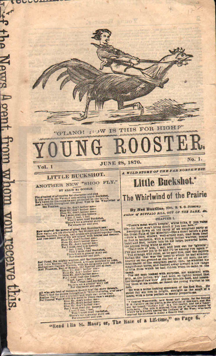 Young Rooster