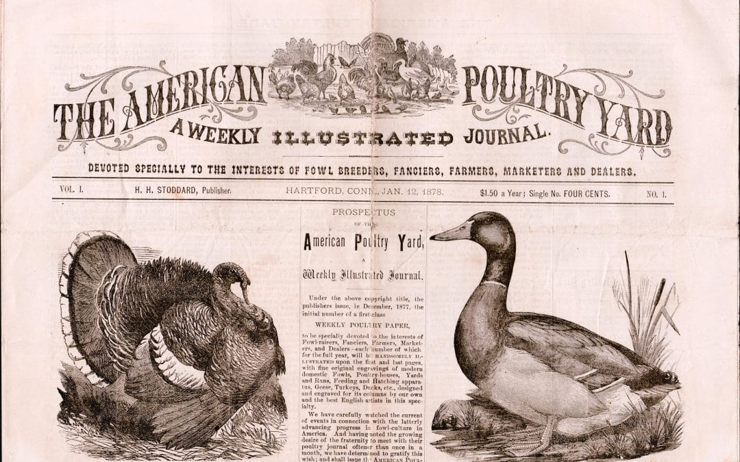 American Poultry Yard