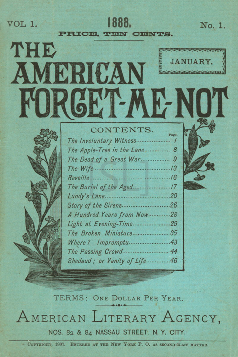 American Forget-Me-Not