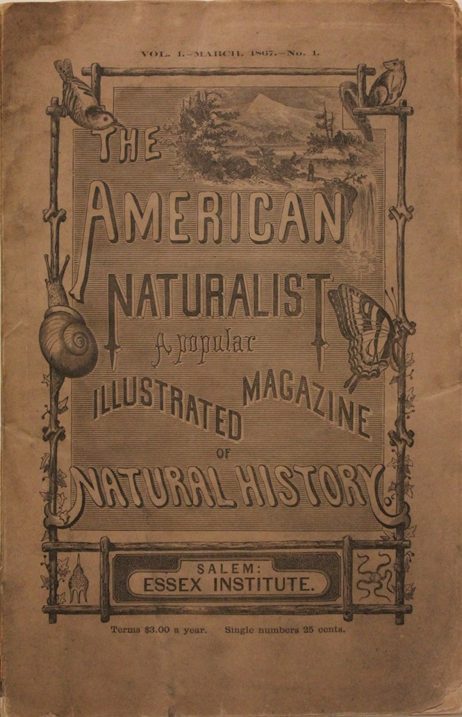 American Naturalist, A Popular Illustrated Magazine of Natural History