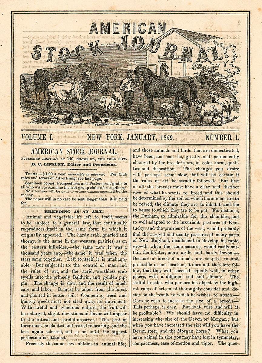 American Stock Journal