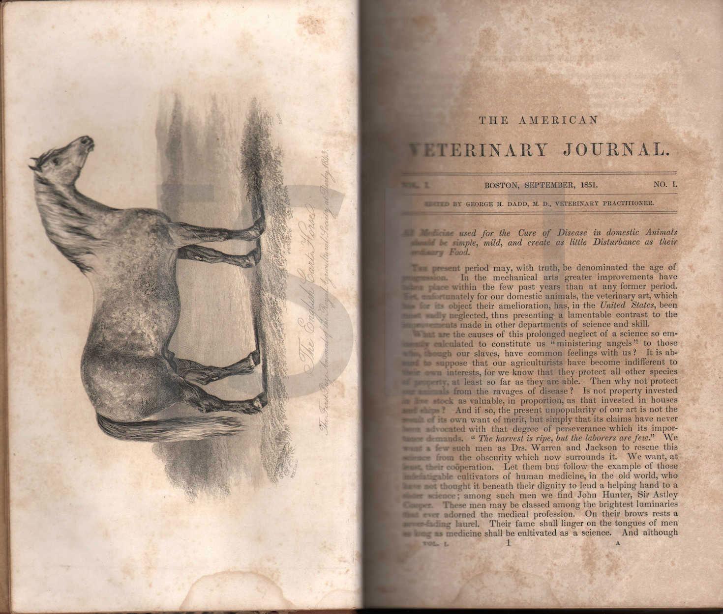 American Veterinary Journal