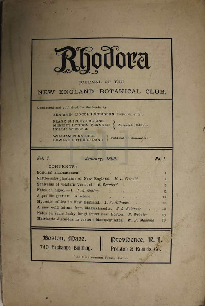 Rhodora